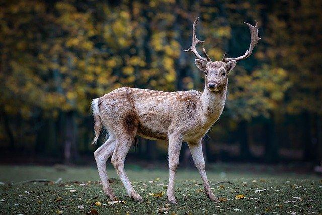 Vansda National Park Images